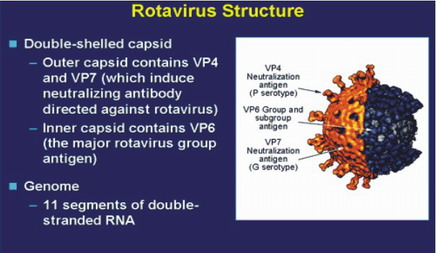 Natural History Of Human Rotavirus Infection