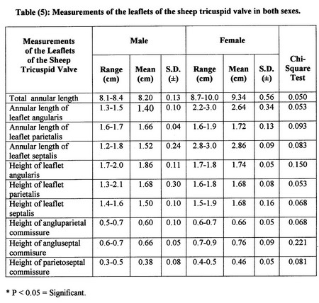 Table of measurements