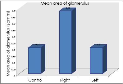 Mean glomerular area from control